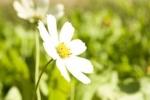 Probiotyki dla ogródków przydomowych
