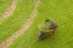 Probiotyki dla pięknych trawników