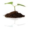 Zdrowe wzrost roślin